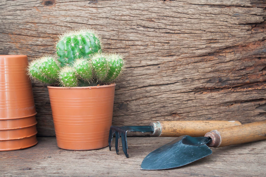 Small garden corner in the house, My cactus. Cactus Garden Wood Vintage Country Nature Pot Landscaping Tree Shovel Pickaxe Home House Lifestyles Background Refeshing Beautiful Close-up Plant Garden Photography Green Color Cactus Flower Cactus Garden Green DIY Old Thorn Summer Wood - Material Table