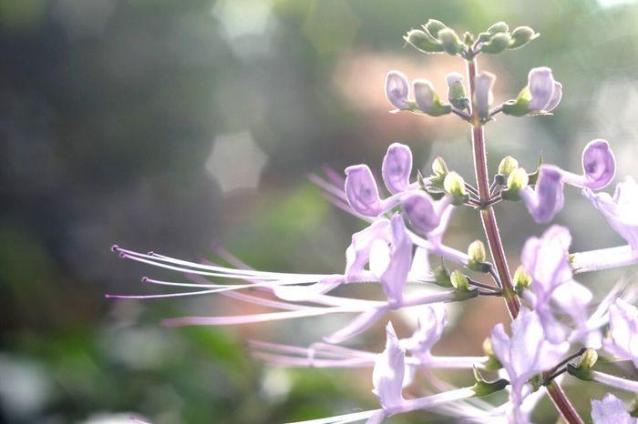 Macro Beauty Flowers Flower Bokeh Plants Flowers,Plants & Garden EyeEm Nature Lover EyeEm Best Shots EyeEm Flower EyeEm Best Shots - Flowers Showcase: January Industar61