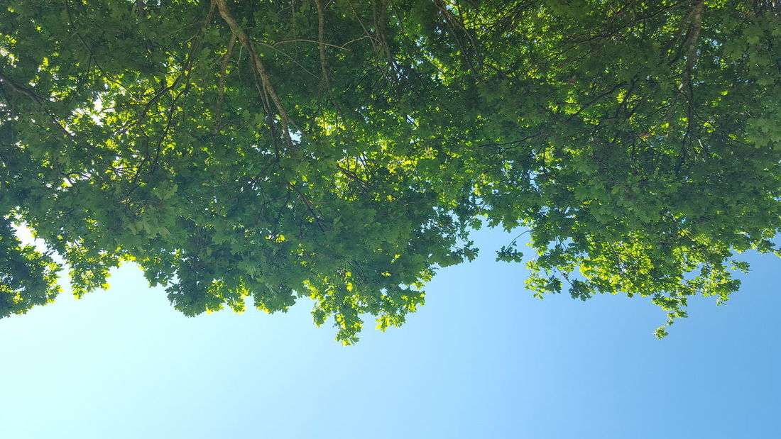 Thinking...🌳🍃Tree Green Color Branch Growth Outdoors Low Angle View Nature Leaf Beauty In Nature No People Day Sky Freshness Water Close-up
