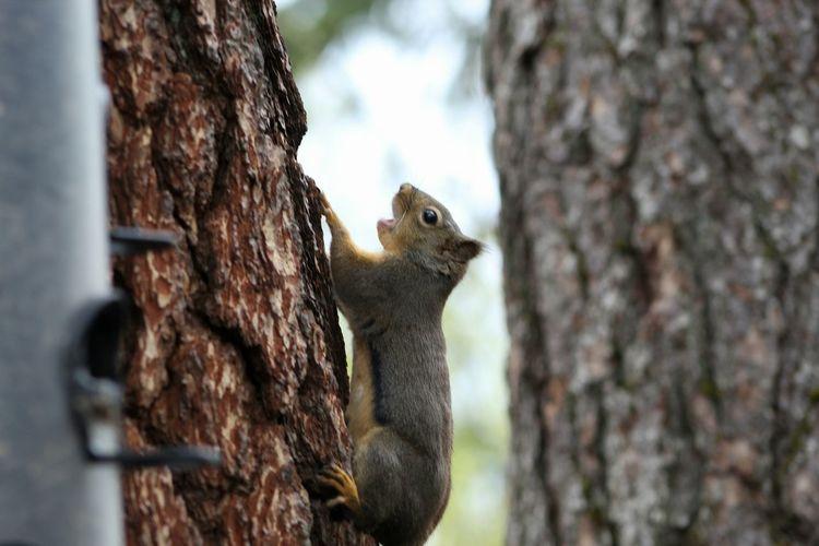 EyeEmNewHere Tree Squirrel Close-up First Eyeem Photo