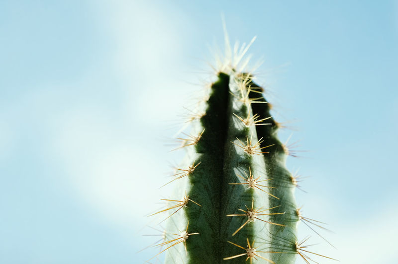 Beautiful prickly cactus on a background of blue sky. fresh succulent cactus closeup.