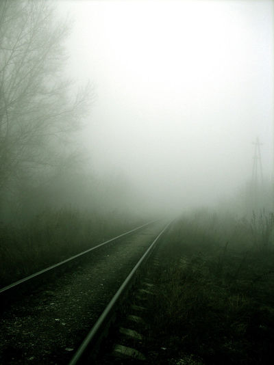Railroad Tracks Amidst Plants During Foggy Weather