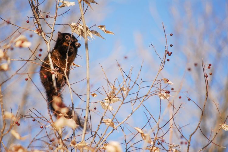 Squirrel views Animal Themes Animal One Animal Plant Animal Wildlife Nature Animals In The Wild Vertebrate No People Selective Focus Low Angle View Branch Sky Day Tree Mammal Growth Outdoors Bird Rodent