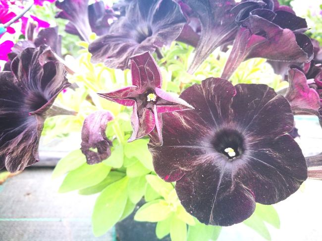 Flower Flower Head Day Nero Pink Color