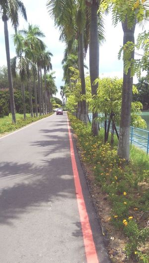 Road Palm Trees Taiwan Lotus Lake