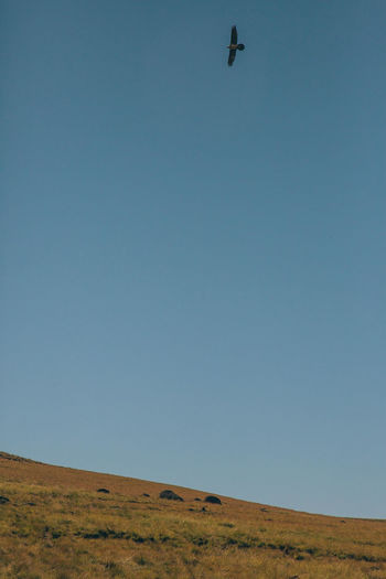 Low angle view of bird flying over land against clear sky