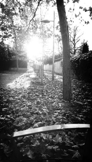 Autumn Blackandwhite Depressed