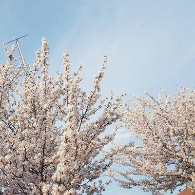 / Noch einen Tag, dann ist wieder Wochenende.😍😄 Thursday Wundervolleaussicht Ichliebedenfrühling Somussdas sein Instadaily Trees Pastell Fairytale  Heaven