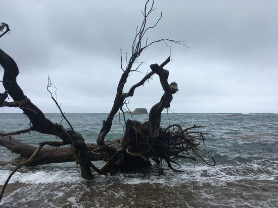 Dominica Beauty In Nature Cloud - Sky Day Dead Tree Horizon Over Water Nature No People Outdoors Scenics Sea Sky Tranquil Scene Tranquility Tree Water