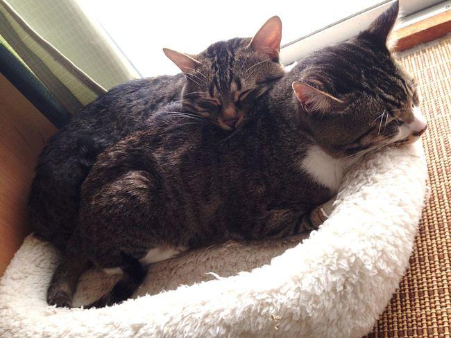 Enjoying Life Cat うちの猫 Love Friend 狭いのにw