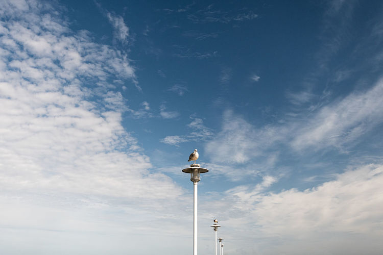 Low angle view of birds each one sitting on a pole at the sea against sky
