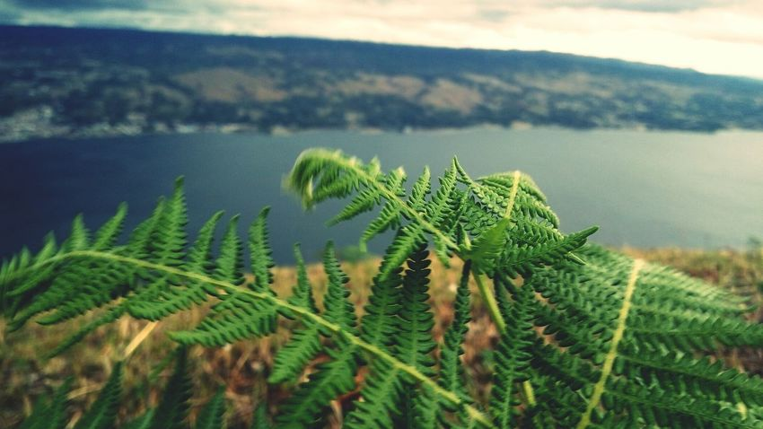 Growth Nature Plant Green Color Lake Mountain Beauty In Nature Scenics Horizontal Outdoors Water No People Wilderness Area Landscape Day Horizontal Nature Plant Fragility Motion Beauty In Nature Low Angle View Close-up Sky Drop