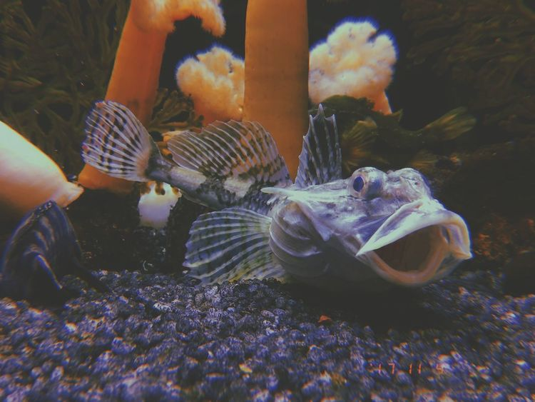 Aquatic Corral Fish Animal Themes Animals In The Wild Sea Life Animal Wildlife Nature Swimming Underwater Water Close-up UnderSea Indoors  No People Togetherness Aquarium Day