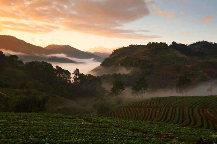 Agriculture Beauty In Nature Cloud - Sky Crop  Day Farm Field Growth Idyllic Landscape Mountain Mountain Range Nature No People Outdoors Rice Paddy Rural Scene Scenics Sky Sunset Tea Crop Terraced Field Tranquil Scene Tranquility Tree