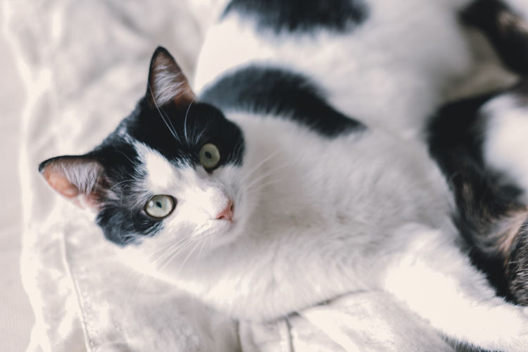 Close-up portrait of a cat lying on bed