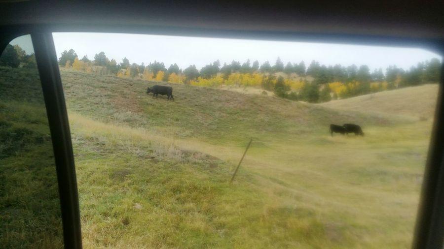 Grass Green Color Field Grassy Tranquil Scene Day Grass Area Solitude Landscape Nature