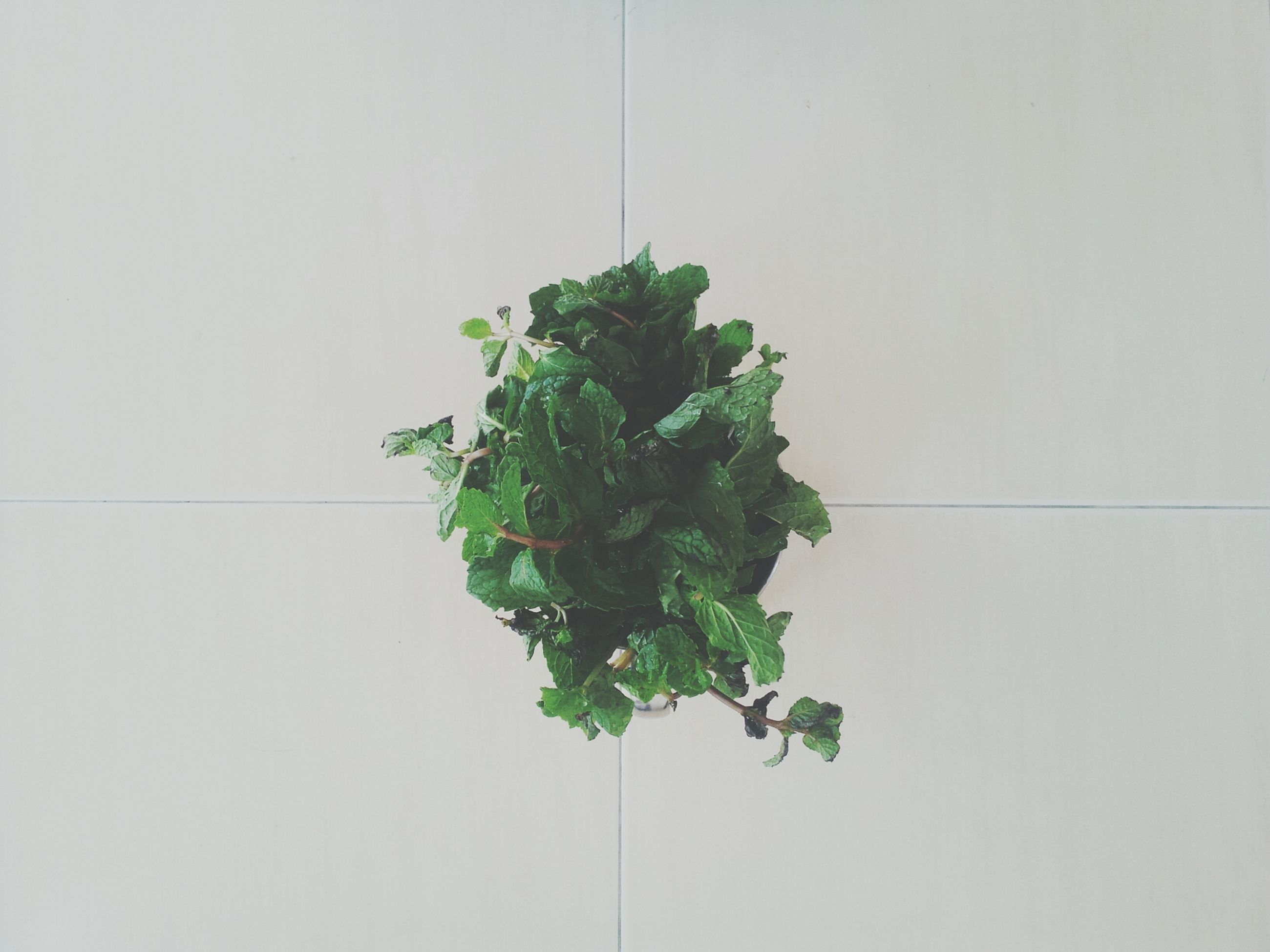 green color, leaf, copy space, growth, plant, wall - building feature, white background, close-up, studio shot, green, stem, nature, wall, freshness, no people, indoors, potted plant, growing, white color, day