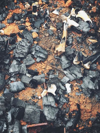 """Ashes to ashes"" Deforestation High Angle View No People Lumber Industry Wood - Material Leaf Directly Above Nature Full Frame Autumn Day Outdoors Large Group Of Objects Close-up Global Warming fire, ashes"