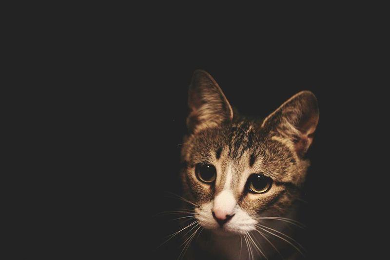 Cat kitten Animals Cute First Eyeem Photo