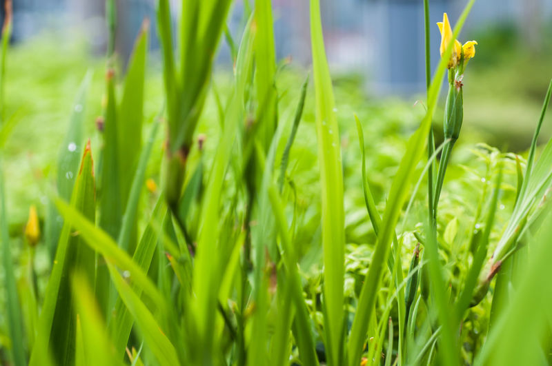 Close-up of fresh green plants on field