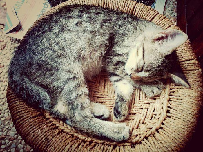 Cute Miao Beautiful Lovely ♥