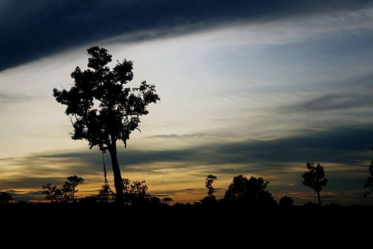 Tree Silhouette Sky Sunset Beauty In Nature Cloud - Sky Scenics Nature Tranquil Scene Dramatic Sky Idyllic Outdoors Tranquility Growth Landscape Low Angle View No People Tree Trunk Palm Tree Day