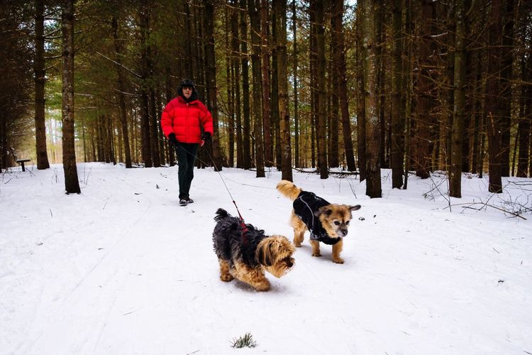 Winter walks Ontario, Canada Red Jacket Red Yorkie Freezing Freezing Cold Canadiannature Pine Tree Woods Dogs Cold Temperature Winter Snow Dog Pets Forest Full Length One Man Only Outdoors Nature Warm Clothing One Person Beauty In Nature