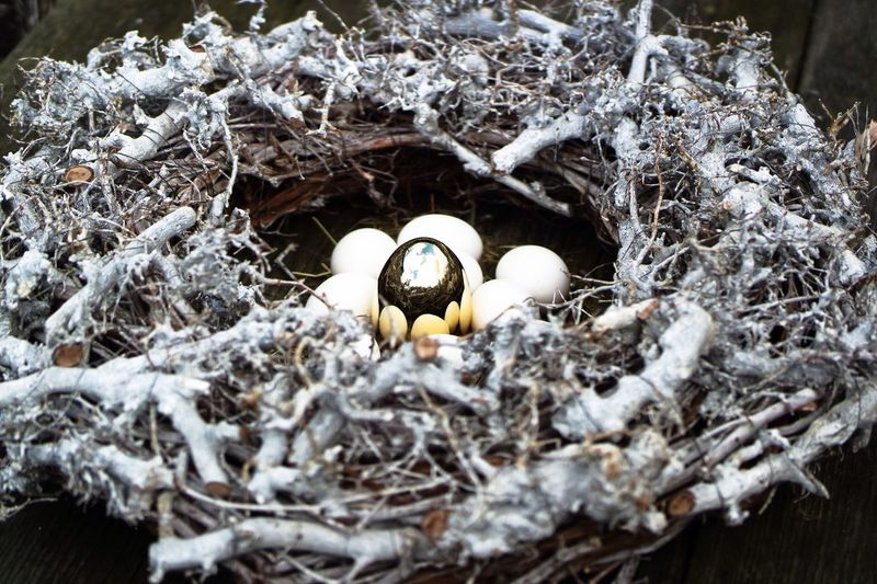 Nature Close-up Outdoors Beauty In Nature Golden Egg Easter Ready Wood - Material Eggs For Breakfast Animal Nest Beginnings Eggshell Easter Eggs Eggs In The Nest Bird Nest Easter Decoration Spring Time Fragility Beauty In Nature White Eggs