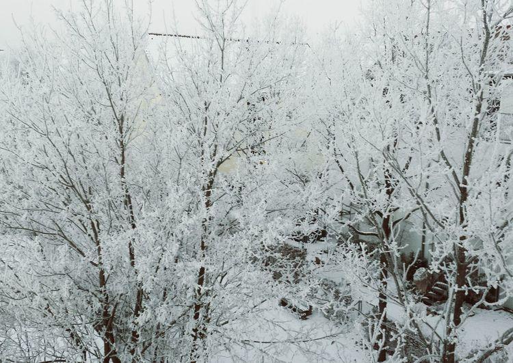 Deepfreeze Woods Hello World Enjoying Life Wintertime