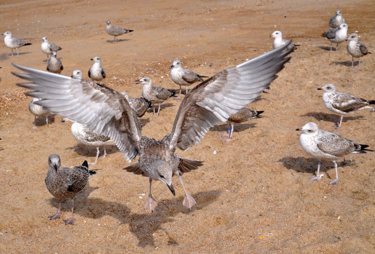 Flock Of Birds On Dirt Road