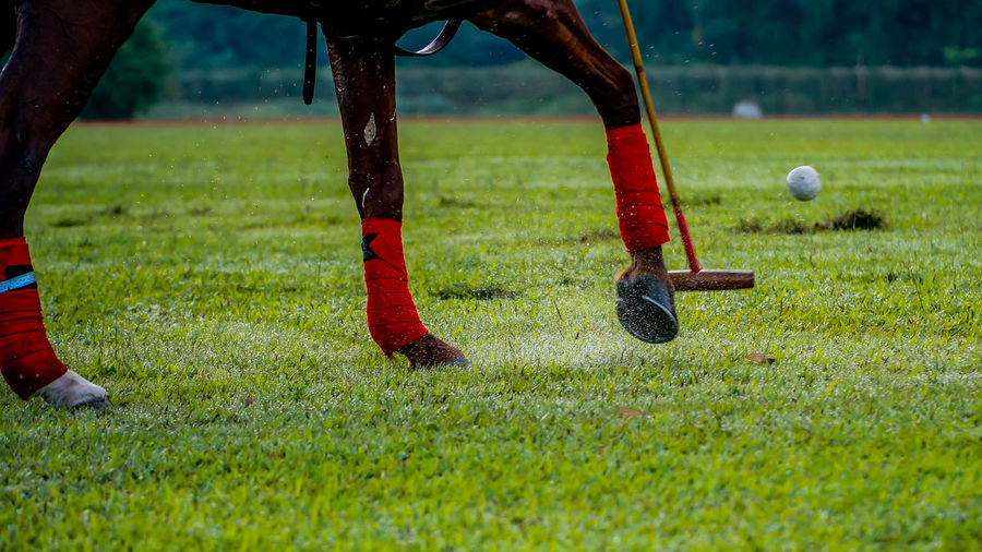 Polo player hitting a ball Ball Competition Day Field Grass Green Color Horse Leisure Activity Lifestyles Low Section Mallet Men One Person Outdoors Playing Playing Field Polo Real People Rider Skill  Sport Taking A Shot - Sport The Great Outdoors - 2017 EyeEm Awards