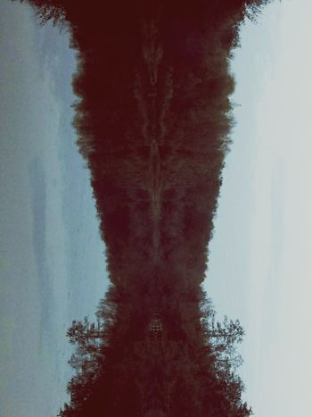 Fractals Psychedelic Forest Lake Tree Water Red Symmetry Sky