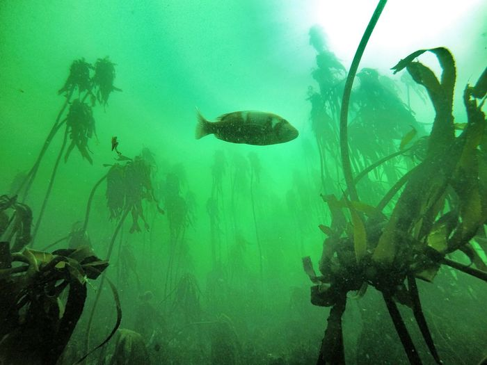 Fish swimming undersea