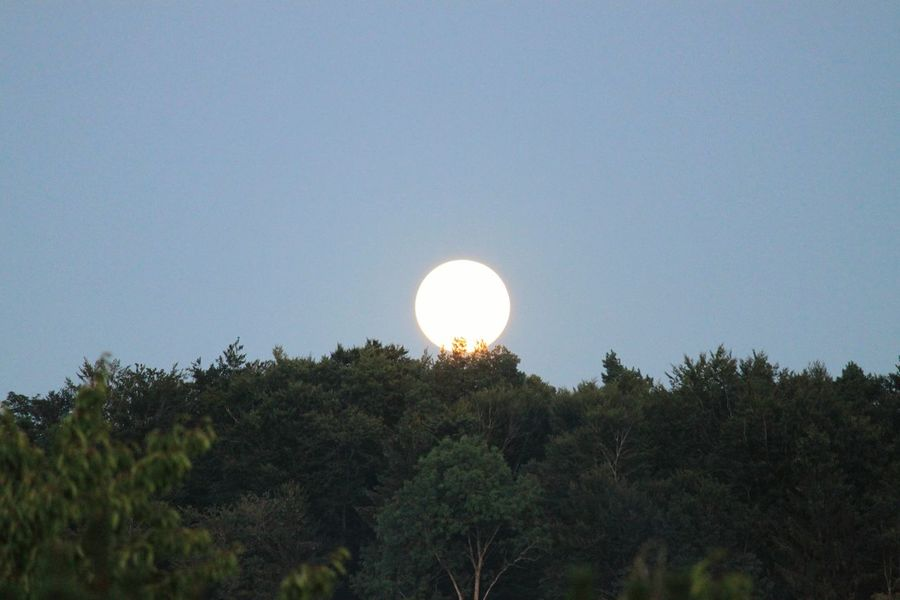 Moon On The Blue Sky Moon Over The Forest Beauty In Nature HJB Moon Moon_collection
