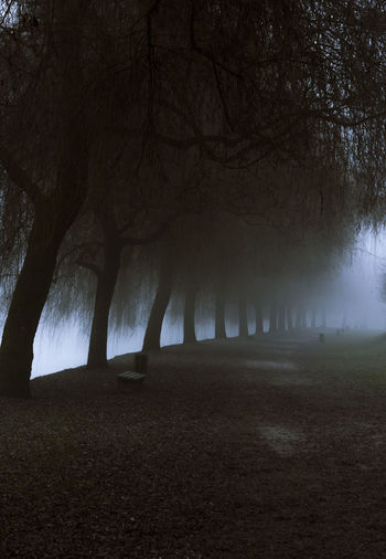 Morning day of December in Ljubljana with an alley passing under a row of leafless trees, covered with strong fog December Ljubljana Riverside Slovenia Weather Winter Alley Fog Foggy Day Forecast Landscape Leafless Trees Mist Mystical Nature No People No Snow  Outdoors Park Tranquility