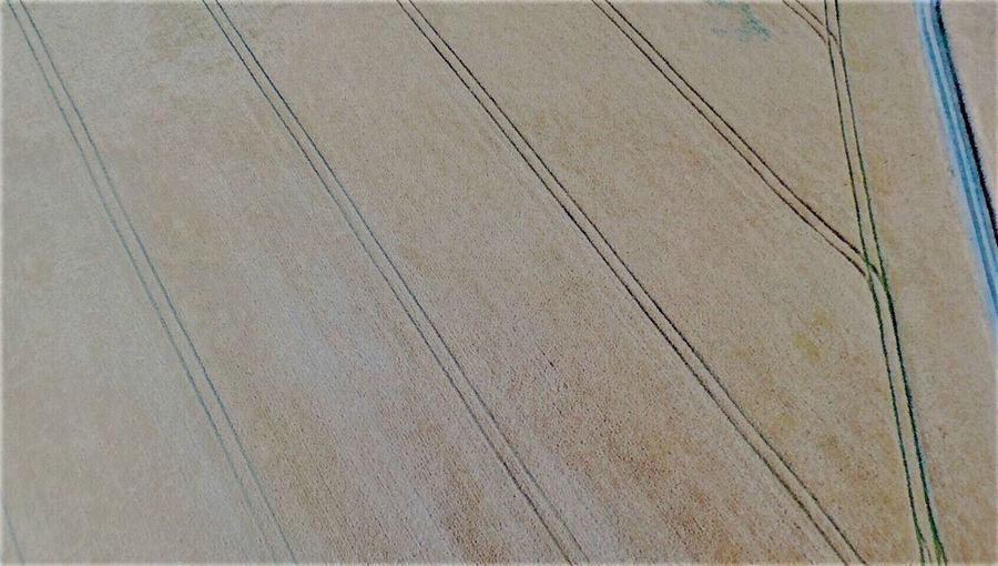 Perspectives On Nature field seen from above Backgrounds Pattern Aerial View Hardwood Floor No People Nature Day Outdoors Wood Paneling Close-up Field Yellow From My Point Of View