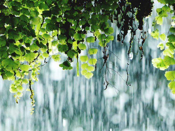 Ferns under waterfall
