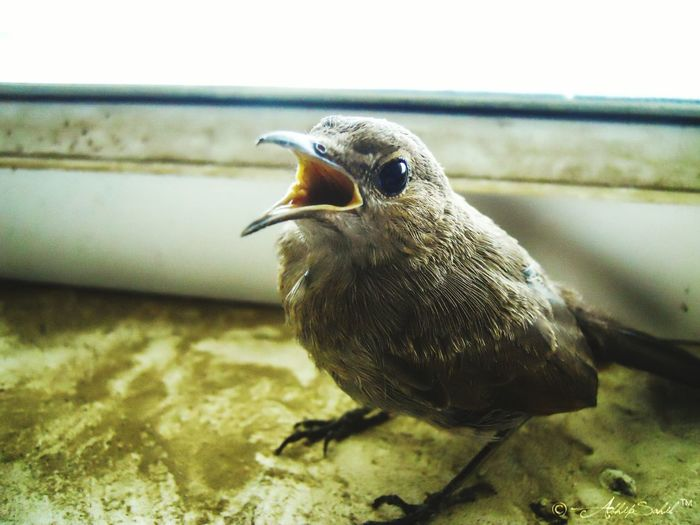 Bird Photography Birdcollection Birds🐦⛅ Birds Of EyeEm  Birds_collection Birdslovers Birdslife Sparrows Sparrow Bird EyeEm Nature Lover EyeEm Best Shots Eyeemphoto EyeEmBestPics EyeEmbestshots