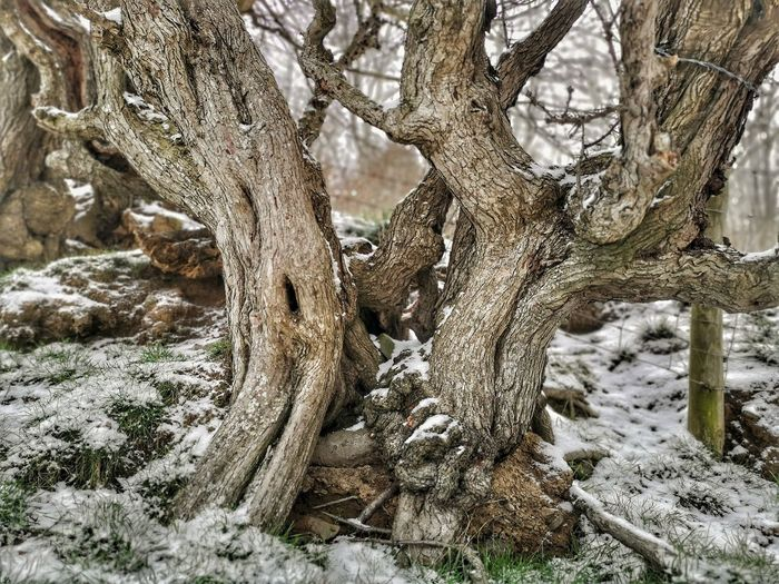 View of tree trunk in snow