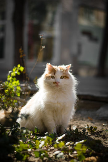 Portrait of white cat in a sunny day