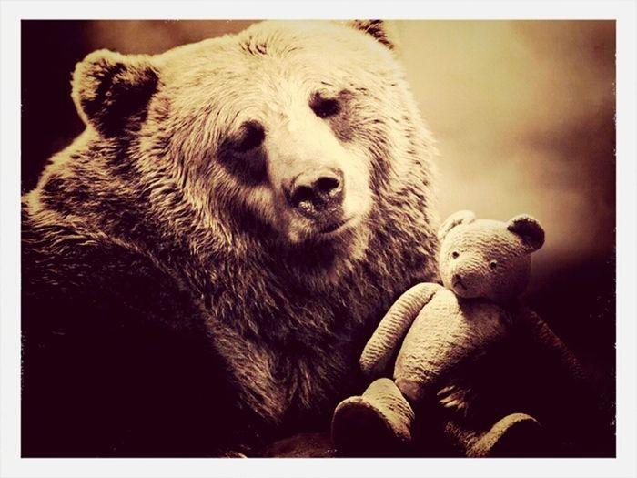 Bear wiTh beAr..