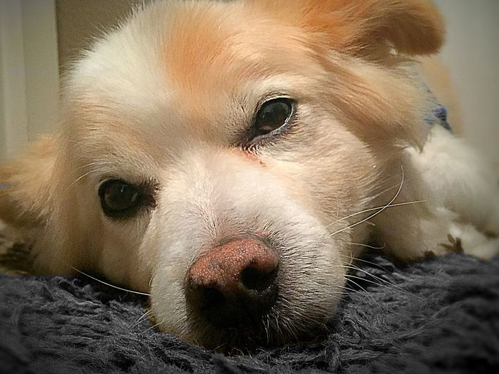 sleepy Rocky 😴 Dog Sleepy Sleepy Dog Check This Out Tired Tired Eyes  Taking Photos Relaxing Enjoy The Moment And Don't Forget LifeLoveLaugh
