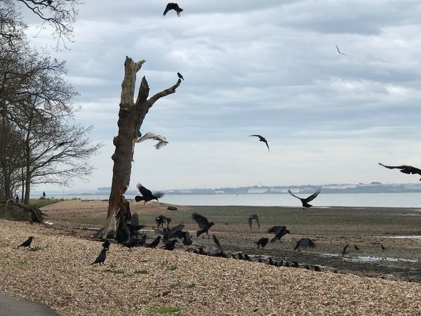 Animals In The Wild Bird Nature Animal Themes Flying Sky Tranquil Scene Outdoors Sea Water Day Beach Scenics Large Group Of Animals Tranquility Beauty In Nature Landscape No People Cloud - Sky Tree Dead Tree Decay