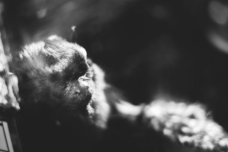 Animal Themes Animal Wildlife Animals In The Wild Bird Close-up Day Japanese Macaque Mammal Monkey Nature No People One Animal Outdoors