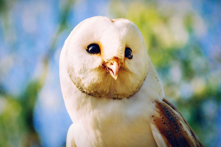 Open Edit Animal Portrait Bird Photography Zoo Bird Getting Inspired Owl