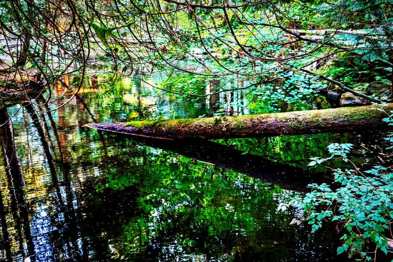 Tree Plant Forest Nature Tranquility Beauty In Nature Water No People Tree Trunk Reflection Outdoors Tranquil Scene WoodLand