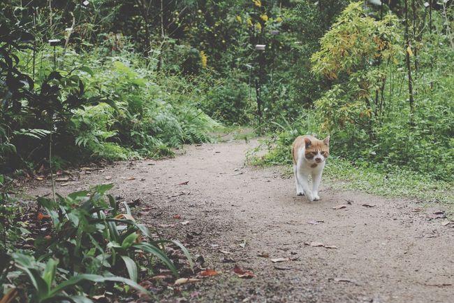 Cat Feral Cat Setouchi Isolated Travel 猫 野良猫 瀬戸内 離島 旅 島巡り Oyamaneko
