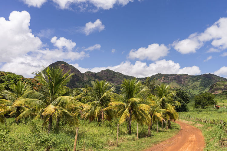 Coconut palm trees plantation in Brazil. Beauty In Nature Cloud - Sky Day Environment Field Green Color Growth Land Landscape Mountain Nature No People Non-urban Scene Outdoors Palm Tree Plant Scenics - Nature Sky Tranquil Scene Tranquility Tree