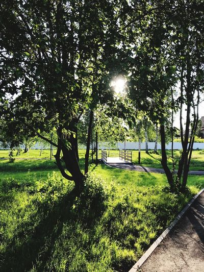 Plant Tree Sunlight Nature Green Color Grass Day Men Sunny Park - Man Made Space Land Shadow Growth Park