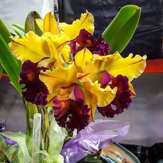 Flowers Orchids Hilo  Myheartinshots Quintaflower